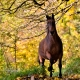 A horse and a beautiful autumn scenery by Christine Haas