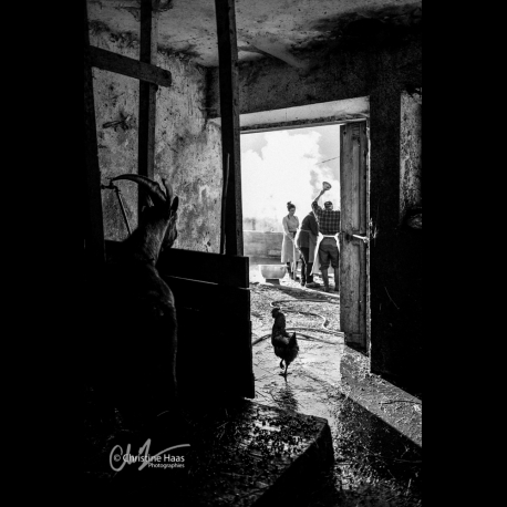 Daily scene in a farm in the French Alps, by Christine Haas