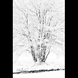 Photo of a tree and snow, like an Indian ink by Christine Haas