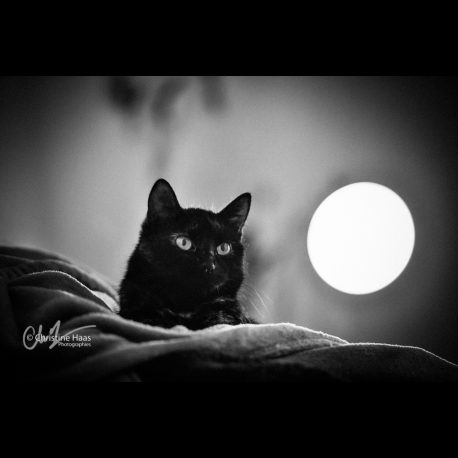 Photo of a black cat and the Moon by Christine Haas