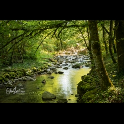 Photo of a peaceful river by Christine Haas photographer