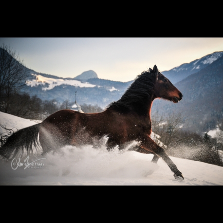 Gallop in the snow